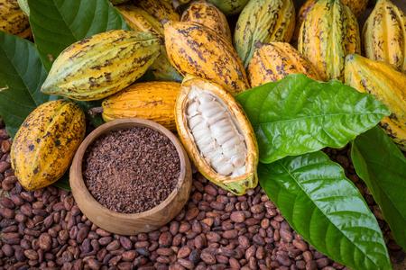 Dojrzały kakao strąk i stalówki, kakaowe fasole ustawiają tło. Zdjęcie Seryjne
