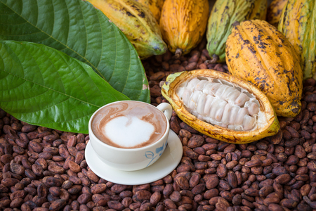 Ripe cocoa pod and beans setup on rustic wooden background.