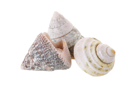 Sea shells arranged isolating on a white background. Stock Photo