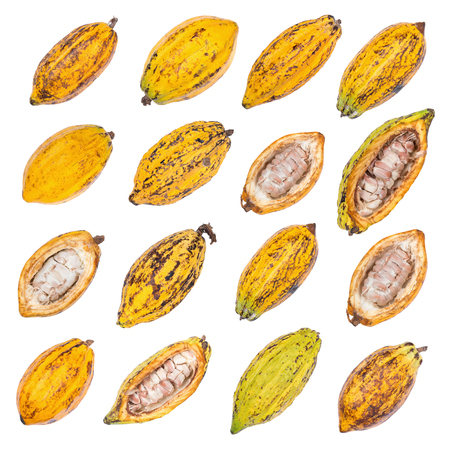 Cacao fruit, raw cacao beans, Cocoa pod isolated on white background.