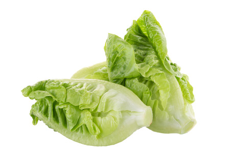 Fresh green cos lettuce Isolated on White Background.