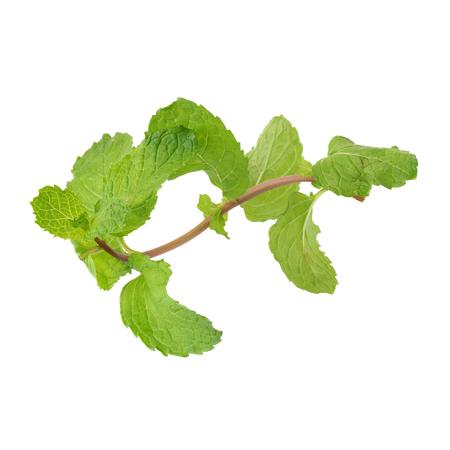 lemon balm: Fresh raw mint leaves isolated on white background.