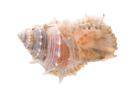 Sea shells arranged isolating on a white background