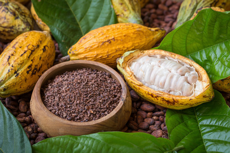 Ripe cocoa pod and nibs, cocoa beans setup background.