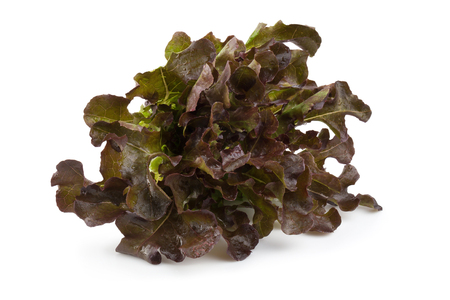 Red oak leaf lettuce isolated on a white background. Stock Photo