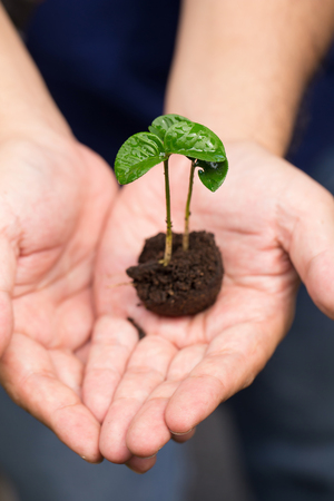 Image of male hands transplanting young plant.