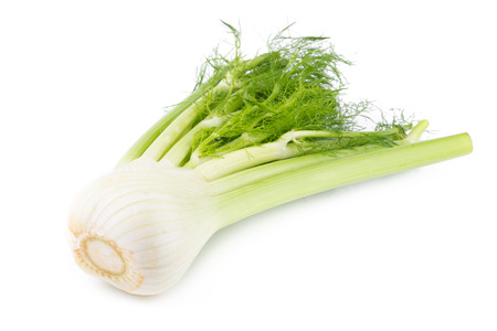 Fresh organic fennel isolated on a white background.
