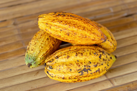Cacao fruit, raw cacao beans and Cocoa pod background. Reklamní fotografie - 119162132