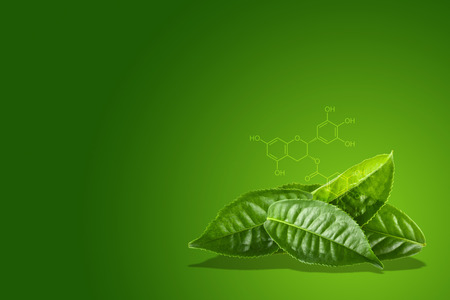 Green tea leaf with the chemical formula of EGCG on Green background. Imagens