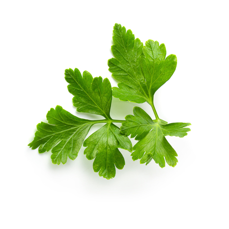 Bunch leaves parsley isolated on white background Stok Fotoğraf