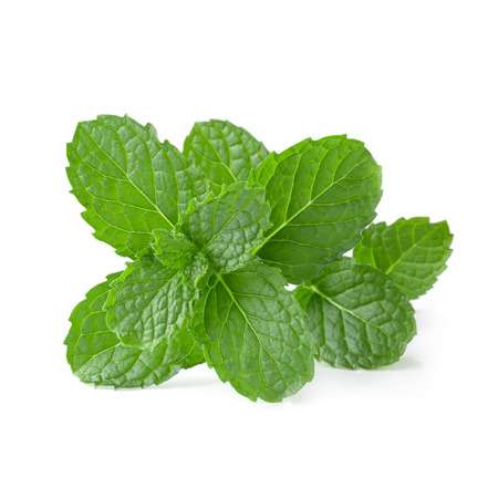 Mint leaves isolated on a white background.