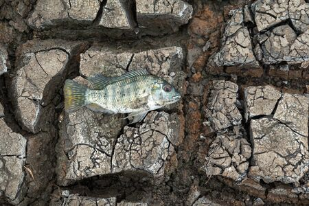 Drought causes the fish to die, Global worming effect