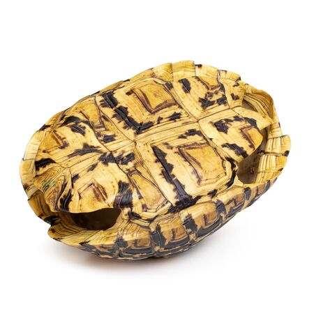 Close-up of Tortoise shell isolated on a white background.