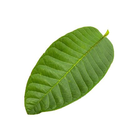 Green Guava leaf isolated on white background. Reklamní fotografie