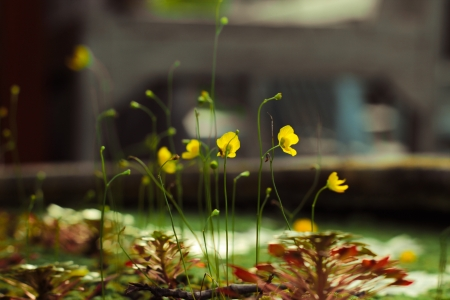 hydrophyte: yellow aquatic plant on green Stock Photo