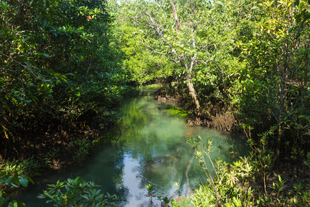 forest and a river landscape at Thapom, Klong Song Nam, Krabi, Thailand