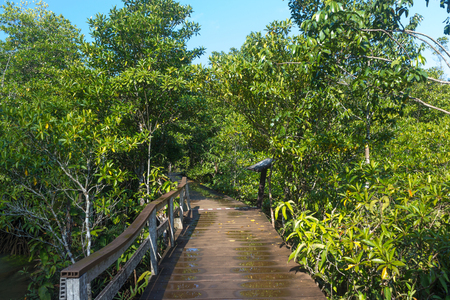 wooden path way in forest at Thapom, Klong Song Nam, Krabi, Thailand