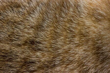 Pelliccia di gatto vicino texture di sfondo. Strisce astratte marroni.