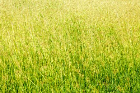 Grass in the meadow on nature background. 免版税图像
