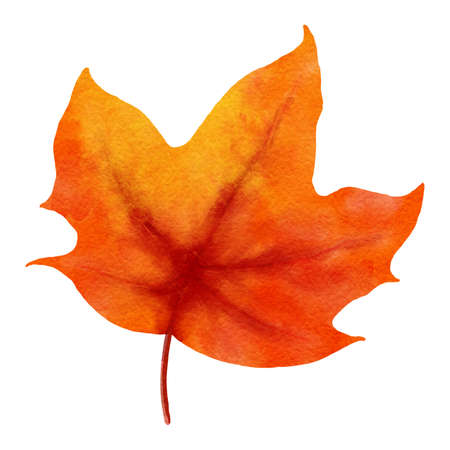 autumn maple leaves watercolor style.