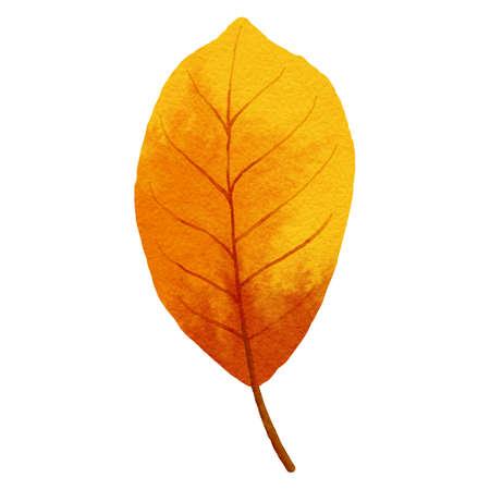 autumn leaves watercolor style. 免版税图像