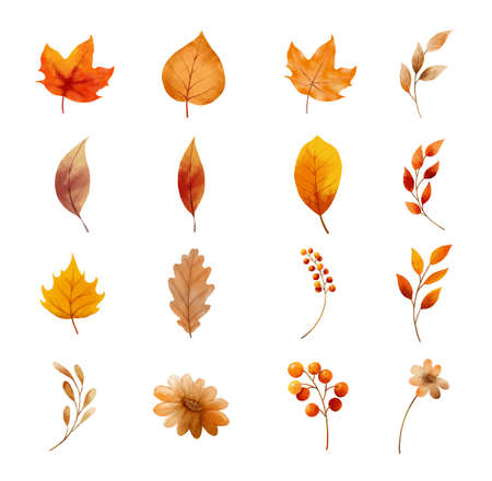 Autumn leaves and flower set isolated on white background. Leaf with watercolor style.