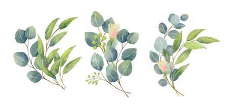 Eucalyptus leaves bouquet in a watercolor style. Floral and leaves bouquets arrangements. 矢量图像