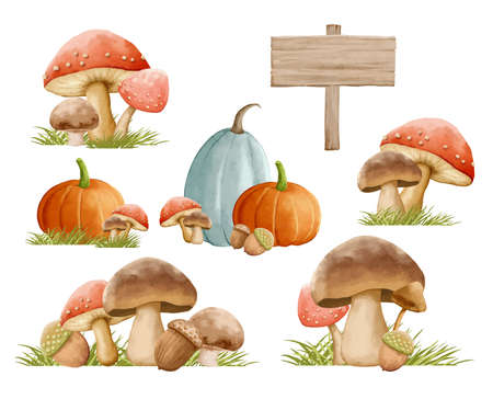 Mushrooms autumn set with grass in watercolor painting style. Mushrooms isolated on a white background.