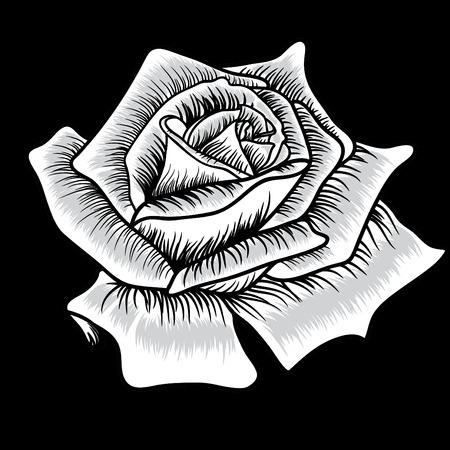 Black silhouette of rose on black background Vector