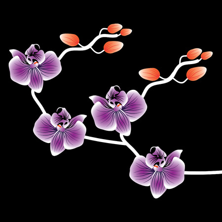 Vector of orchid flower on black background