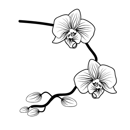 Vector of orchid flower on white background