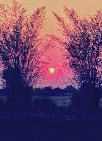 Sunset, bamboo Stock Photo