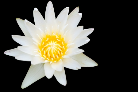White lotus in basin Stock Photo - 15739145