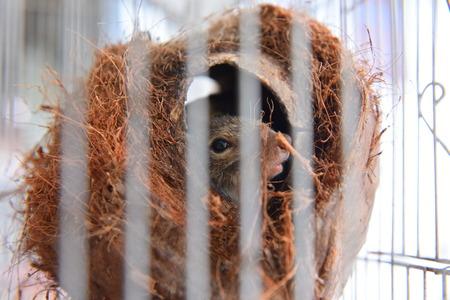 ardilla: Chipmunk lindo del animal doméstico