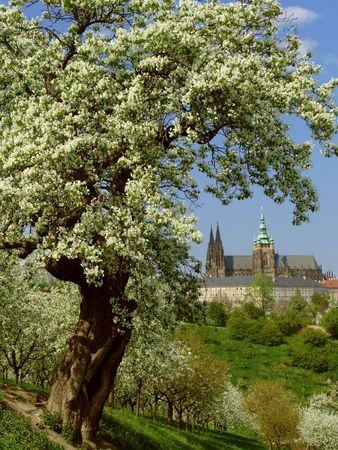 gothic castle: Punto de vista sobre el Castillo de Praga g�tico con la floraci�n de �rboles y c�sped