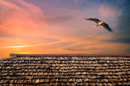 Stork in flight and background evening sky