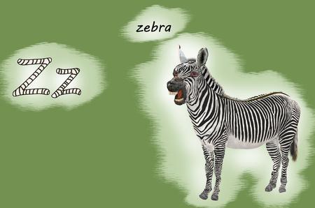 Illustration for teaching children the English alphabet with cartoon zebraThe letter Z.