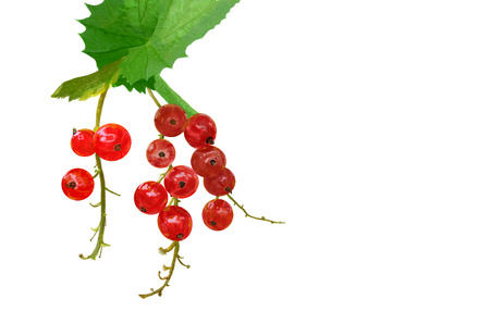 Branch of red currants with leaf isolated on a white background