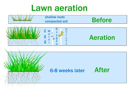 Lawn aeration for active plant growth. Free access of water and air to soil. Process steps before and after.  Lawn grass care service,  lawns and landscape design services. Vector infographics