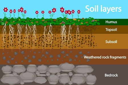 Soil layers. Diagram for layer of soil. Soil layer scheme with grass and roots, earth texture and stones. Cross section of humus or organic and underground soil layers beneath. Vector illustration Çizim