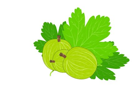 Gooseberry isolated on a white background. Gooseberry icon in flat style. Berry branch with leaves. Ripe fruit vector for juice or jam label, packing, print, advertisement, posters, decoration.