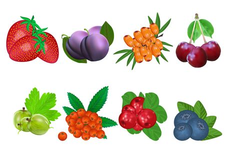 Berry icon set isolated on white background. Strawberries, plum, buckthorn, cherry, gooseberry, rowan, lingonberry, blueberry. Sweet fruit. Packaging logo design. Realistic stock vector illustration Foto de archivo - 134573291