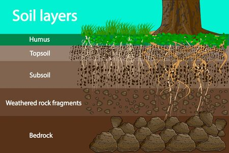 Soil layers. Diagram for layer of soil. Soil layer scheme with grass and roots, earth texture and stones. Cross section of humus or organic and underground soil layers beneath. Vector illustration Vettoriali
