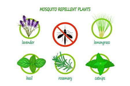 Piante repellenti per zanzare infografica isolati su sfondo bianco. Piante da utilizzare come repellente naturale contro le zanzare. Lavanda, citronella, basilico, rosmarino e erba gatta. Illustrazione vettoriale d'archivio. EPS 10