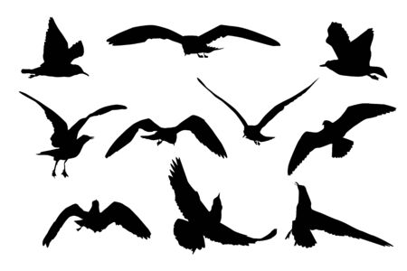 Set of black flying seagull silhouettes isolated on white background. Collection of cartoon seagulls and sea gull silhouette. Variety flying atlantic seabird in a flat style. Stock vector illustration