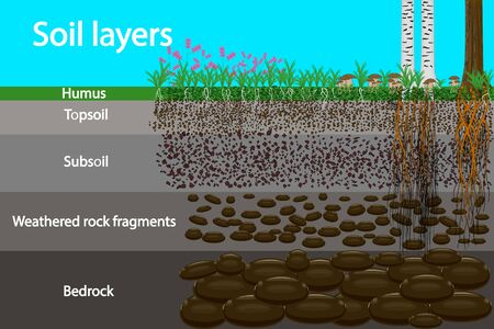 Soil layers. Diagram for layer of soil. Soil layer scheme with grass and roots, earth texture and stones. Cross section of humus or organic and underground soil layers beneath. Stock vector illustration