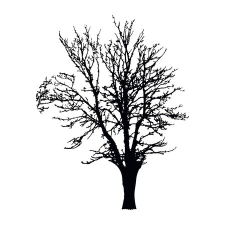 Realistic tree silhouette isolated on white background. Black large dried tree with bare branches without leaves. Winter scenery tree. Outline icon for nature apps and websites. Stock vector. EPS 10
