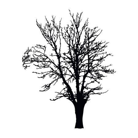 Silueta de árbol realista aislado sobre fondo blanco. Árbol seco grande negro con ramas sin hojas. Árbol de paisaje de invierno. Icono de contorno para sitios web y aplicaciones de la naturaleza. Stock vector. EPS 10
