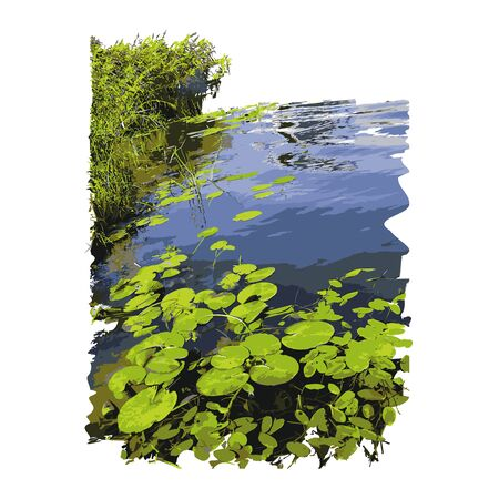 Realistic lake with water lilies or lotus leaves and reed isolated on white background. Lake plants, nature landscape. Calm pond scene. Freshwater lake ecosystem. Stock vector illustration. EPS 10