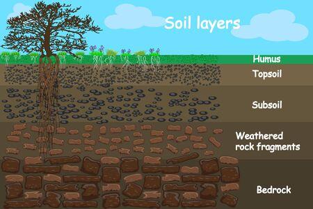 Bodenschichten. Diagramm für die Bodenschicht. Bodenschichtschema mit Gras und Wurzeln, Erdstruktur und Steinen. Querschnitt durch Humus oder organische und unterirdische Bodenschichten darunter. Vektor-Illustration